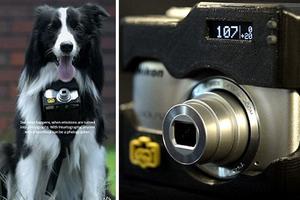 Φωτογραφική μηχανή για... σκύλους