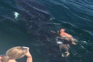 Καβάλησε... φαλαινοκαρχαρία για να τον πάει βόλτα