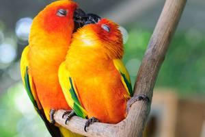 Έρωτας και φιλιά στο ζωικό βασίλειο