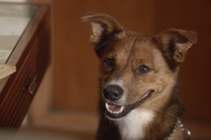 Ένας σκύλος μεταφέρει το πιο απρόσμενο μήνυμα