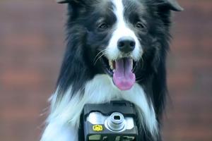 Ένας μοναδικός τρόπος για να γίνει ο σκύλος… φωτογράφος