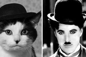 Γάτες που θυμίζουν κάτι άλλο