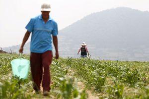 Δεσμεύει εισαγωγές καλαμποκιού από την Ινδία ο Καναδάς