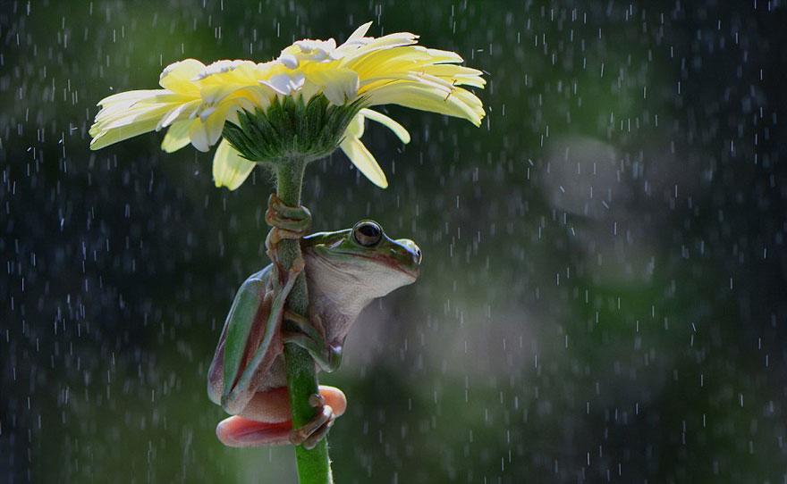 ομπρέλα ζώα