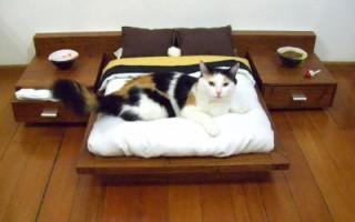 Πώς μεταμορφώνεται ένα σπίτι που ανήκει σε… γάτα