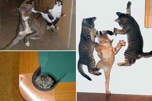 Οι γάτες έχουν γονίδια νίντζα