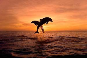 Δελφίνια στο ηλιοβασίλεμα