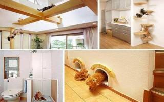 Παράδεισοι για γάτες