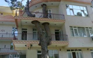Όταν η σύγχρονη ζωή σέβεται την φύση