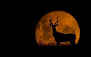 Ζώα στο... φεγγάρι