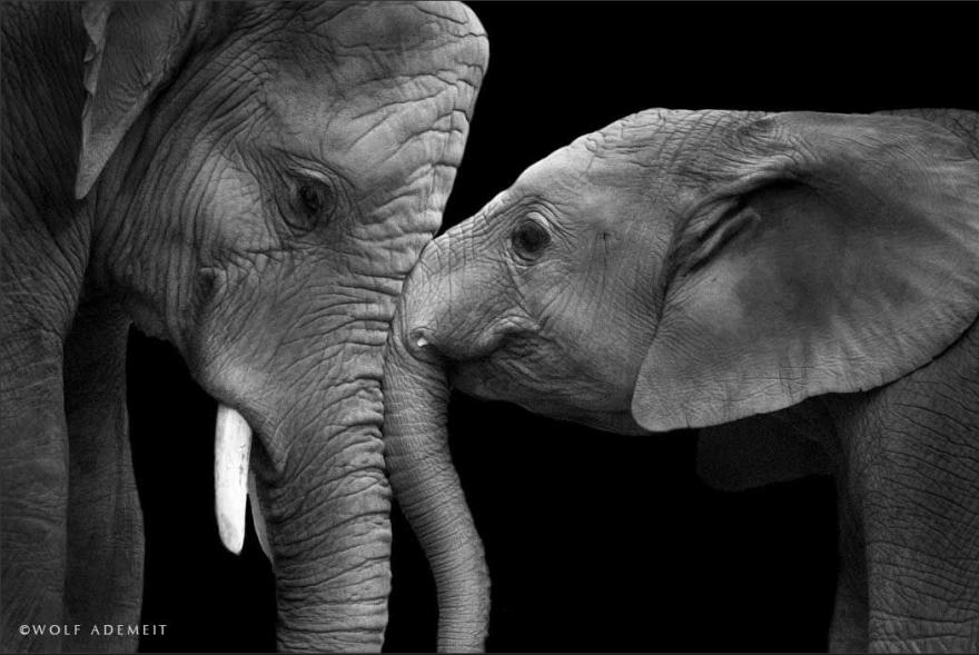 Elephant-Love-6__880
