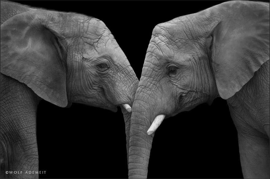 Elephant-Love-7__880