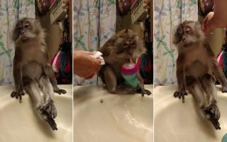 Ο καλλωπισμός της μαϊμούς