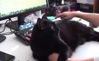 Δεν σε αφήνει η γάτα να δουλέψεις;