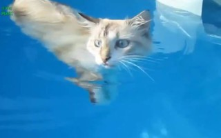 Γάτες με αδυναμία στο νερό