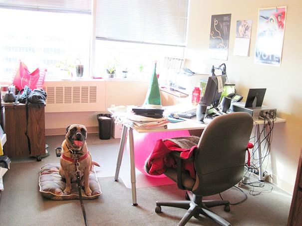 Σκύλος δουλειά