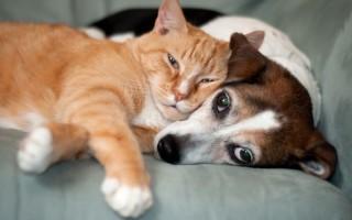 Οι Γάλλοι προτιμούν τις γάτες από τους σκύλους