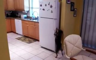 Διαρρήκτης ψυγείου