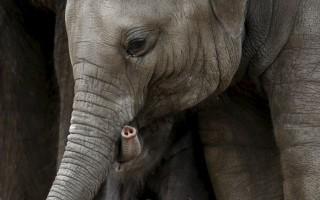 Ελεφαντίνα τραυμάτισε θανάσιμα άνδρα στη Γερμανία
