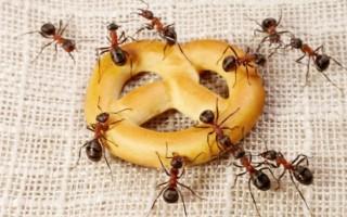 Πώς να κρατήσετε μακριά τα μυρμήγκια που εμφανίζονται την άνοιξη