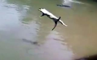 Έριξαν ζωντανή γάτα σε λίμνη με κροκόδειλους