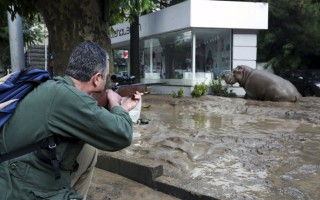 A man shoots a tranquilizer dart to put a hippopotamus to sleep at a flooded street in Tbilisi, Georgia, June 14, 2015. At least five people died and several are missing as a result of heavy rainfall and floods overnight in the Georgian capital Tbilisi, Georgian news agencies reported on Sunday. Animals from the city's zoo including tigers, lions, bears and wolves escaped from cages damaged by the rainfall. Some were captured or killed while the search for others goes on.  REUTERS/Beso Gulashvili