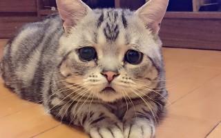 Η πιο θλιμμένη γάτα