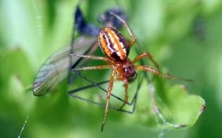 Εξαφανισμένη αράχνη εντοπίστηκε ξανά στην Αγγλία