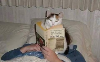 Γάτες και ανάγνωση