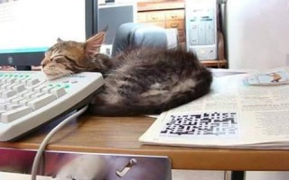 Οι γάτες έχουν μία ερωτική σχέση με τα πληκτρολόγια