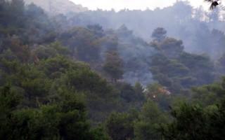 Σε εξέλιξη φωτιά στην Άνω Ποταμιά Ακράτας