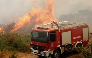 Κάηκαν ελαιόδεντρα στην Πάλαιρο