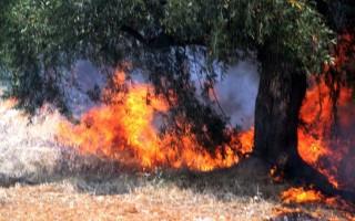 Σε εξέλιξη πυρκαγιά στη Νέα Πέραμο