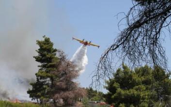 Πολύ υψηλός και πάλι αύριο ο κίνδυνος πυρκαγιάς