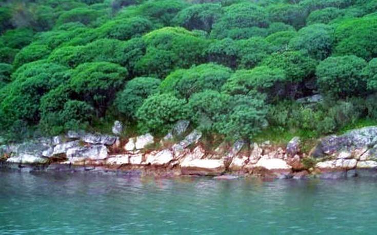 DULICHIUM_ISLAND2