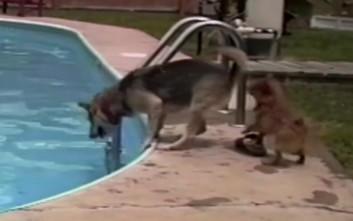 Πώς αντιδρούν οι σκύλοι στις πισίνες