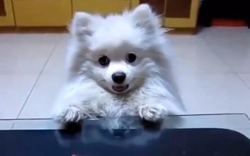 Σκύλοι εν δράση