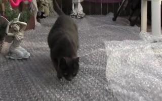 Τρελό κόλλημα για γάτες