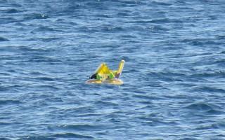 Οι γονείς έκαναν μπάνιο και ξέχασαν το μωρό τους στη θάλασσα