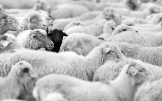 Τα μαύρα πρόβατα γνωστών οικογενειών