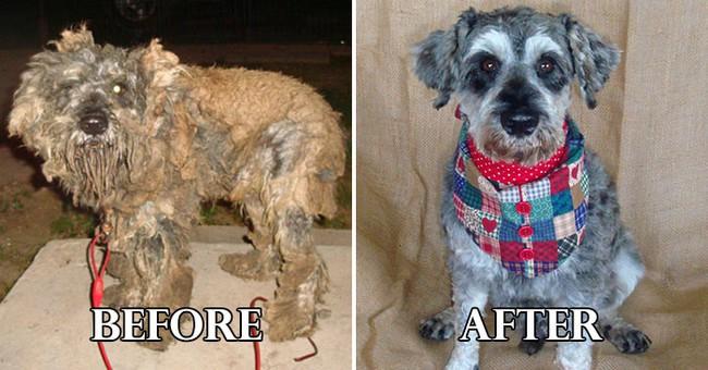 Σκύλοι μετά την σωτηρία