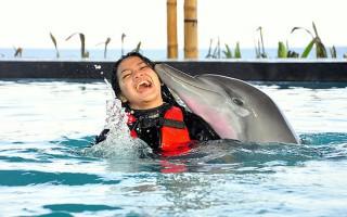 Δελφίνια κινδυνεύουν με τύφλωση από το χλώριο πισίνας