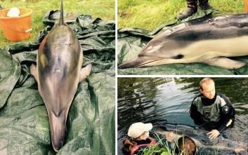 Ευθανασία σε δελφίνι που έπαθε ηλιακό έγκαυμα