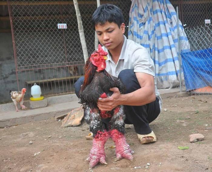 dong_tao_chicken_13
