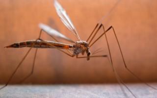 Συνεχίζονται οι ψεκασμοί για τα κουνούπια στον Πειραιά