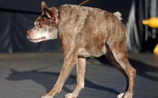 Ο σκύλος που κέρδισε σε διαγωνισμό ασχήμιας