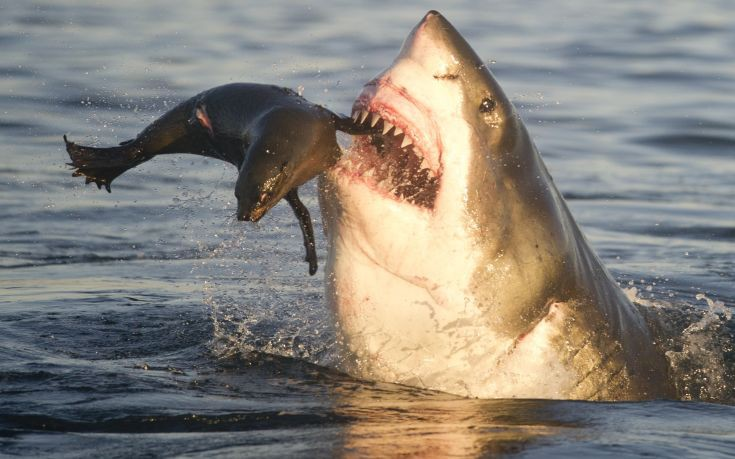 Jaws Seals Pups Fate