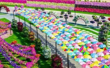 Ο κήπος των θαυμάτων στο Ντουμπάι
