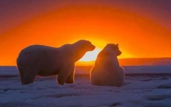 Πολικές αρκούδες στο ηλιοβασίλεμα