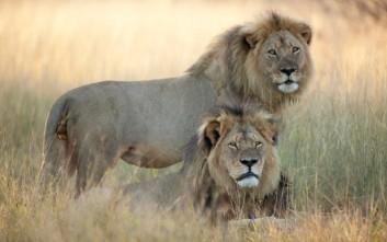 Ποια ζώα κινδυνεύουν περισσότερο με εξαφάνιση